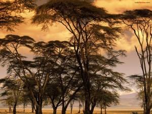 Postal: Árboles en terreno árido