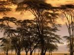 Árboles en terreno árido