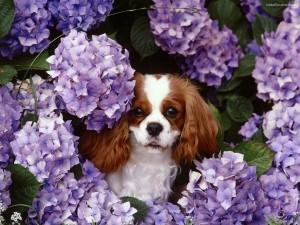 Postal: Perrito entre flores
