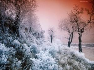 Postal: Vegetación helada