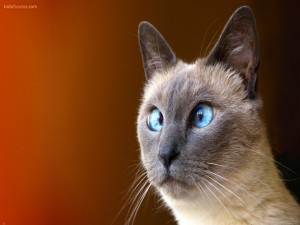 Postal: Gato bizco