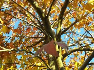 Postal: Otoñales hojas amarillas