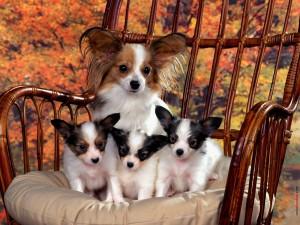 Postal: Perrita con sus tres cachorros