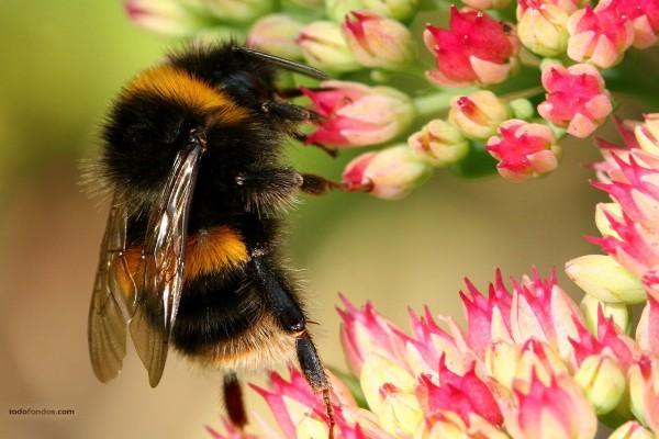 Una abeja puesta en pie
