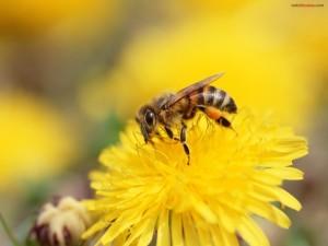 Una abeja sobre una flor amarilla