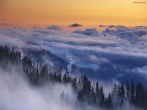 Nubes bajas sobre el bosque