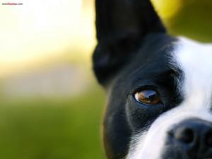 Postal: Ojo de perro