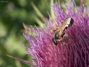 Abeja sobre una flor morada