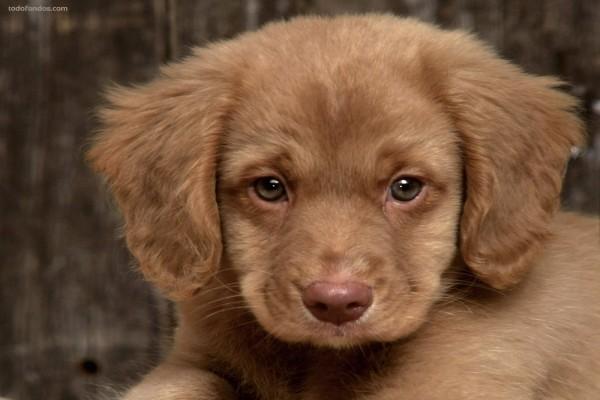 Perrito con cara triste