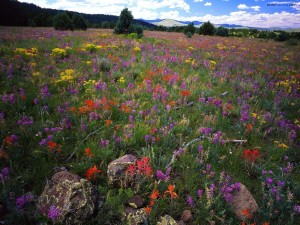 Campo de flores de colores