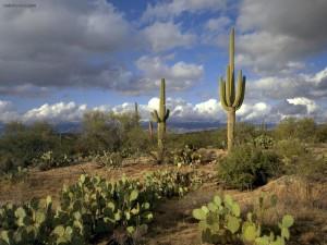 Postal: Cactus en el campo