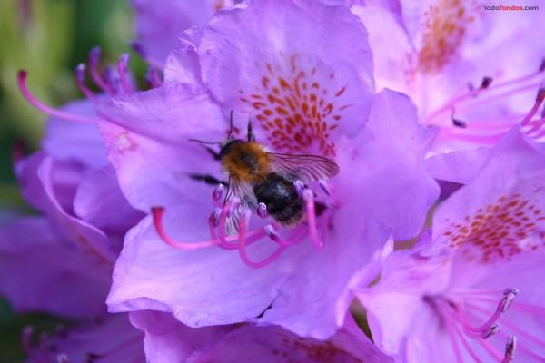 Abeja en una flor morada