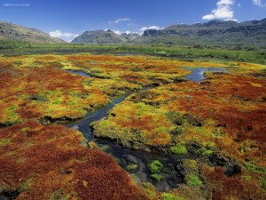 Terreno musgoso