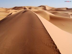Postal: Huellas de serpiente en el desierto