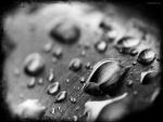 Gotas de agua en blanco y negro