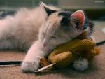 Gatito durmiendo sobre un peluche
