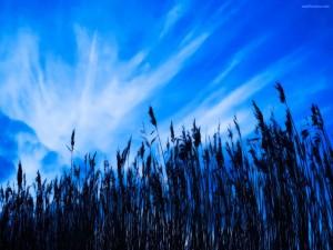 Bajo un cielo muy azul