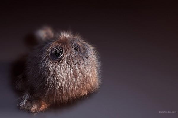 Mascota peluda