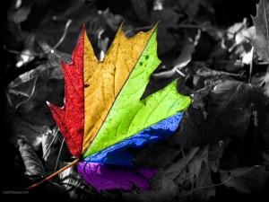 Postal: Hoja multicolor