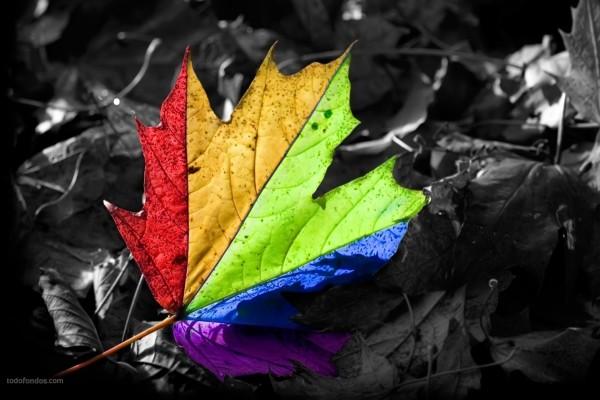 Hoja multicolor