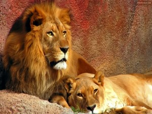 Postal: León y leona