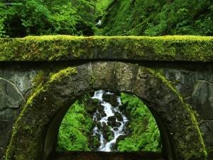 Antiguo puente cubierto de musgo