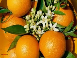 Postal: Naranjas y flores de azahar
