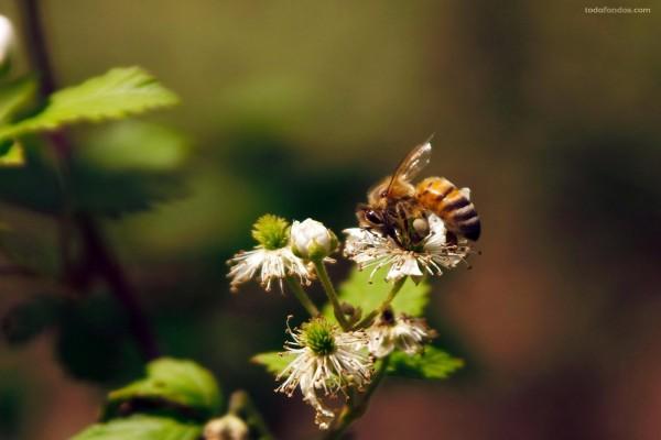 Abeja abrazada a una flor