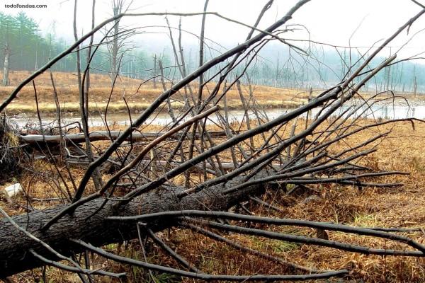 Árboles muertos en la ribera del río