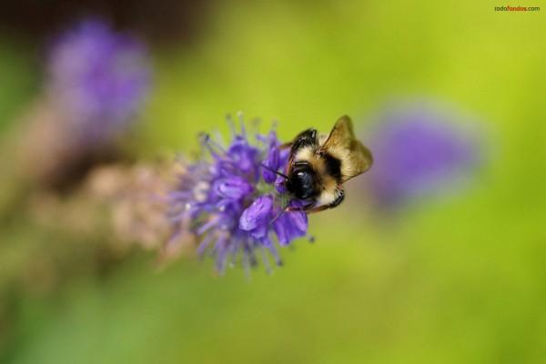 Abeja sobre flor morada