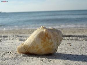 Postal: Caracola en la playa