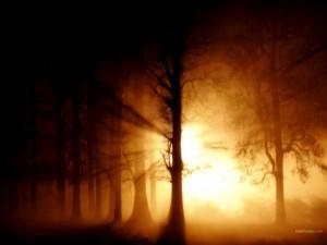 Postal: La luz del Sol filtrándose entre los árboles