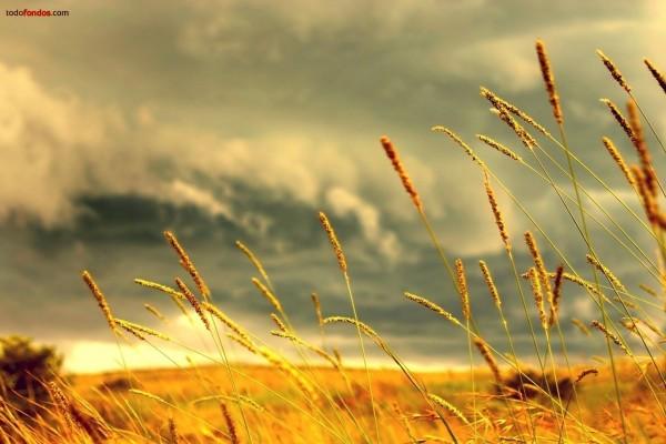 Espigas al viento