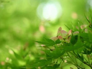 Plantas verdes