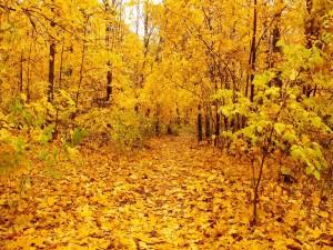 Un bosque de hojas amarillas
