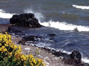 Flores a la orilla del mar