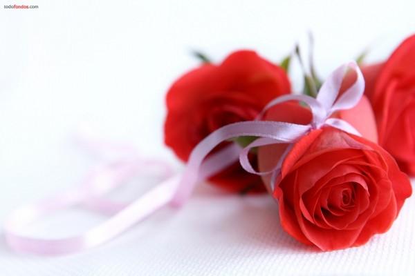 Rosas con un lazo