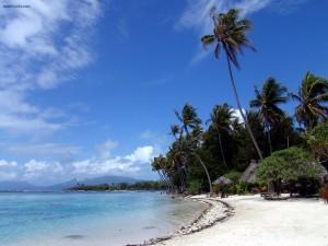 Una playa de arena blanca y altas palmeras