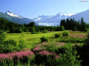 Postal: Pradera con flores, y al fondo las montañas