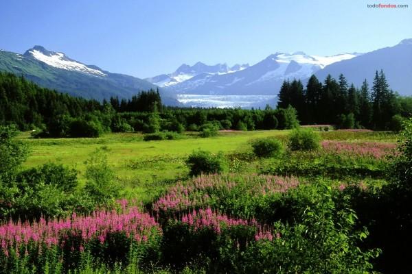 Pradera con flores, y al fondo las montañas