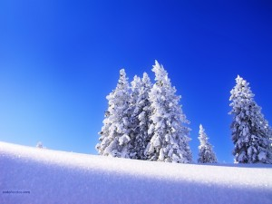 Postal: Un manto de nieve