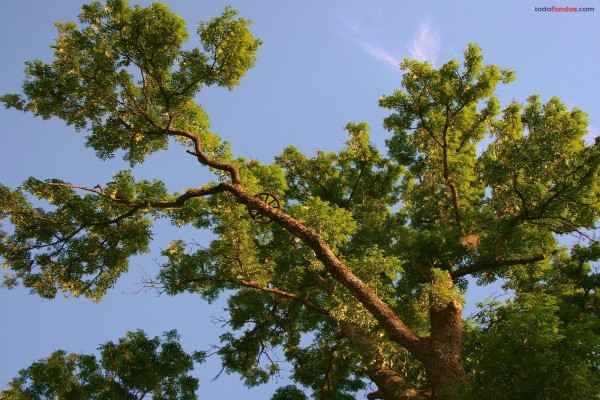 Las ramas de un árbol elevándose al cielo