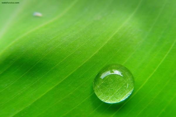 Una gota de agua deslizándose sobre una hoja