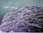 Florecillas violetas