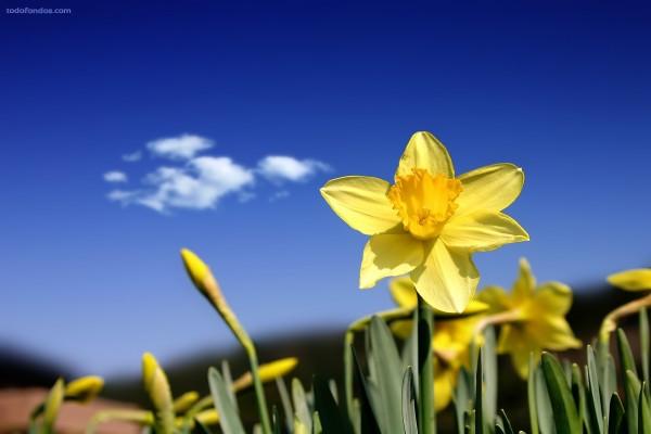 Flores amarillas bajo un cielo azul