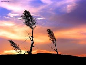 Plantas azotadas por el viento