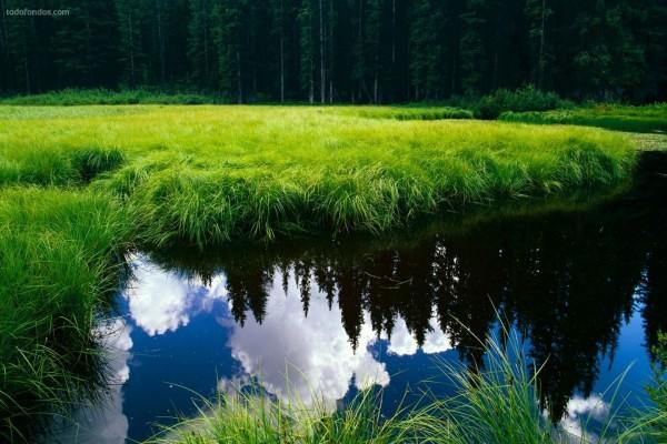 Espejo en la superficie del agua
