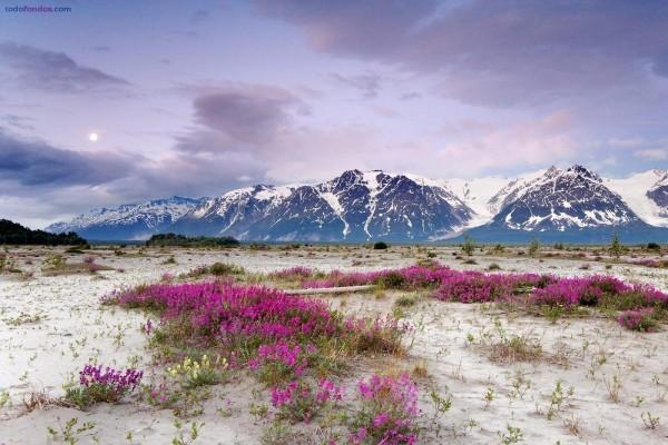 Flores en un desierto al pie de las montañas