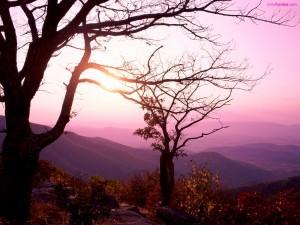 Postal: Árboles frente a un paisaje de tonos morados