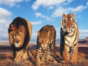 Trio de felinos